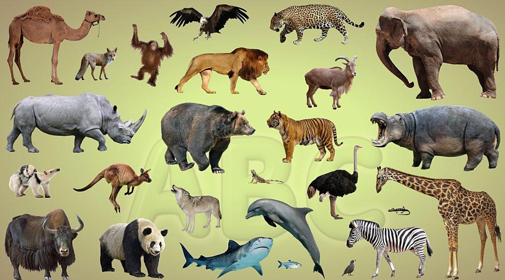 Zanimljivosti iz životinjskog carstva - Page 6 Maxresdefault-50-1000x555