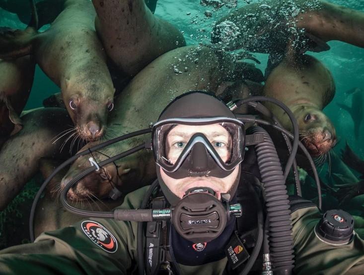 Fotografije radoznalih morskih lavova osvojile svijet